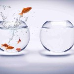 onafhankelijke vis